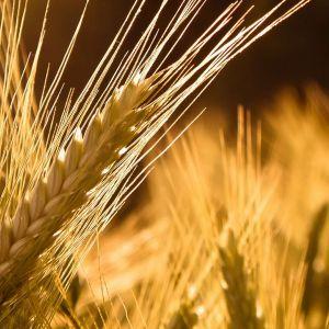 Grain-Wallpaper-HD-.jpg